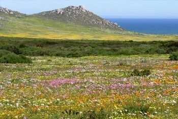 Postberg Flower Reserve, Cape West Coast